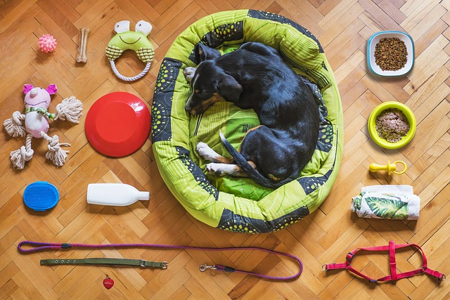 hračky pro psa