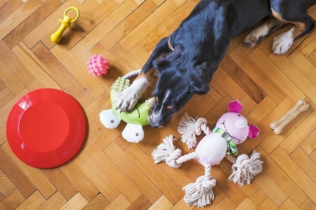 psí hračky